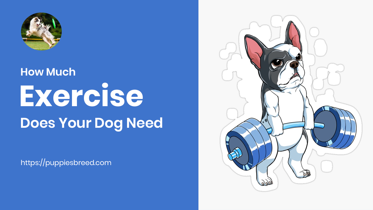 How Much Exercise Does Your Dog Need? - Puppies Breed